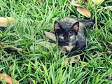 Cat Leaves and Grass